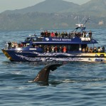 Whale-Watch boat