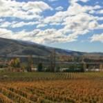Otago wines