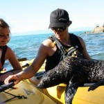 Kayaking with seals, Nelson