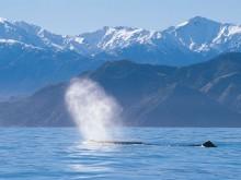 Kookier Whale Watching